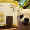 モグワン100円キャンペーン